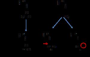 Post-translational-modifications of vimentin peptides