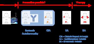 The development of rheumatoid arthritis